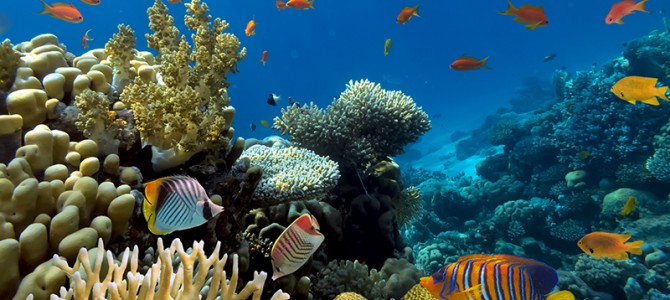 Best diving spots in the Maldives