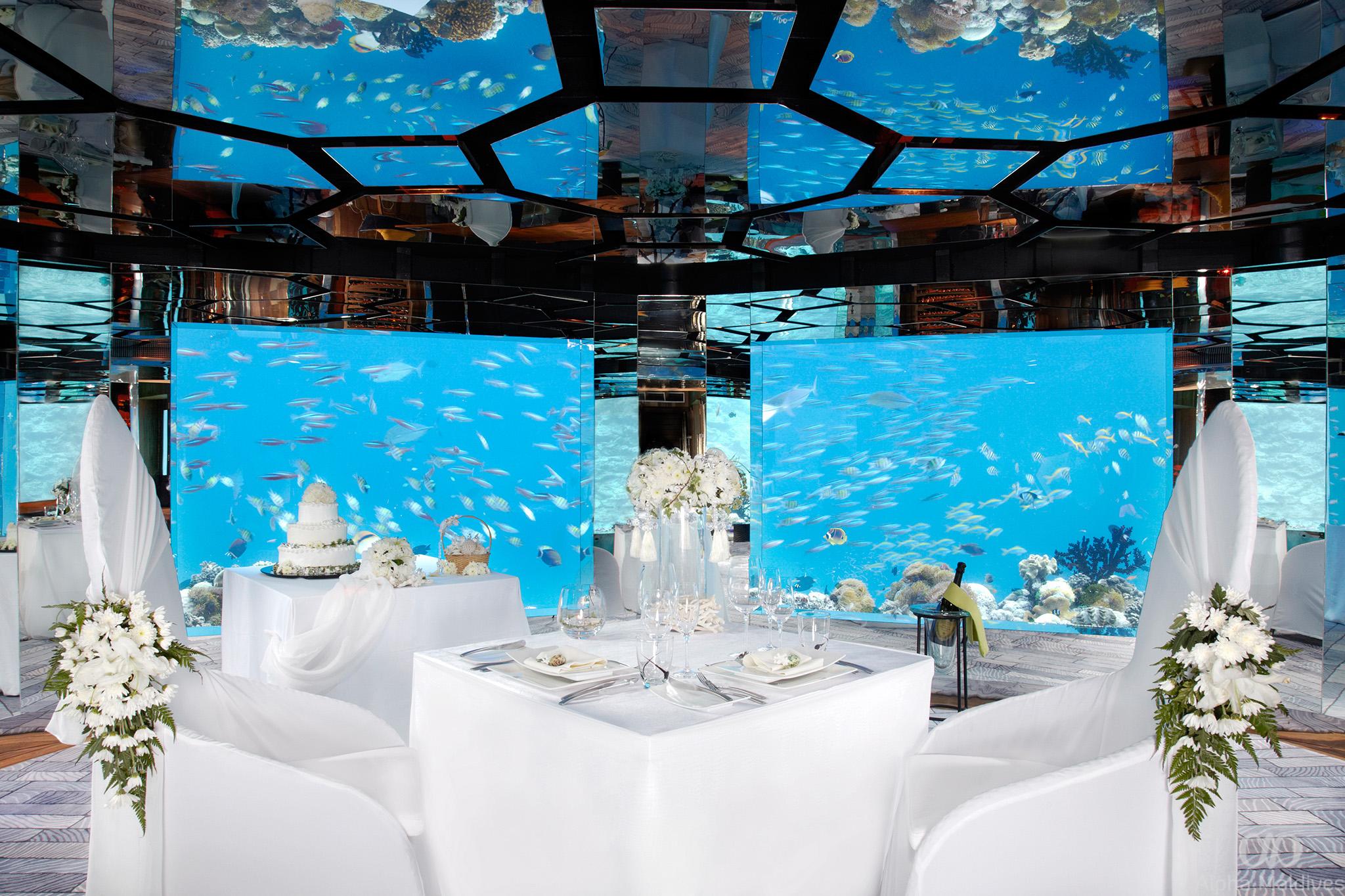 Why you should celebrate your wedding in the maldives hiakih61617750seaunderwaterrestaurantwedding junglespirit Choice Image