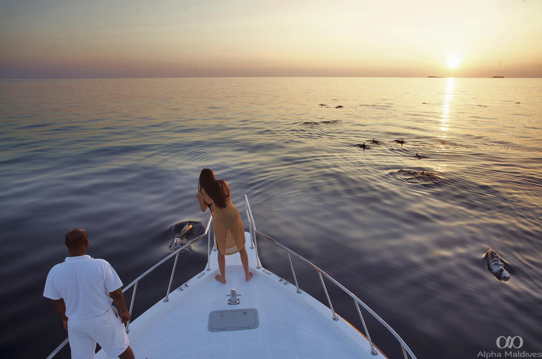 Dolphin Cruise - Soneva Fushi, Maldives by Dan Kullberg