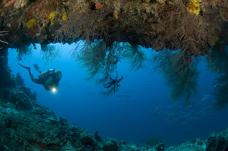 House_reef_diving_photoLarge(1)